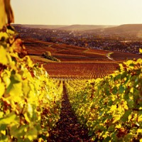 Travel: Champagne tour