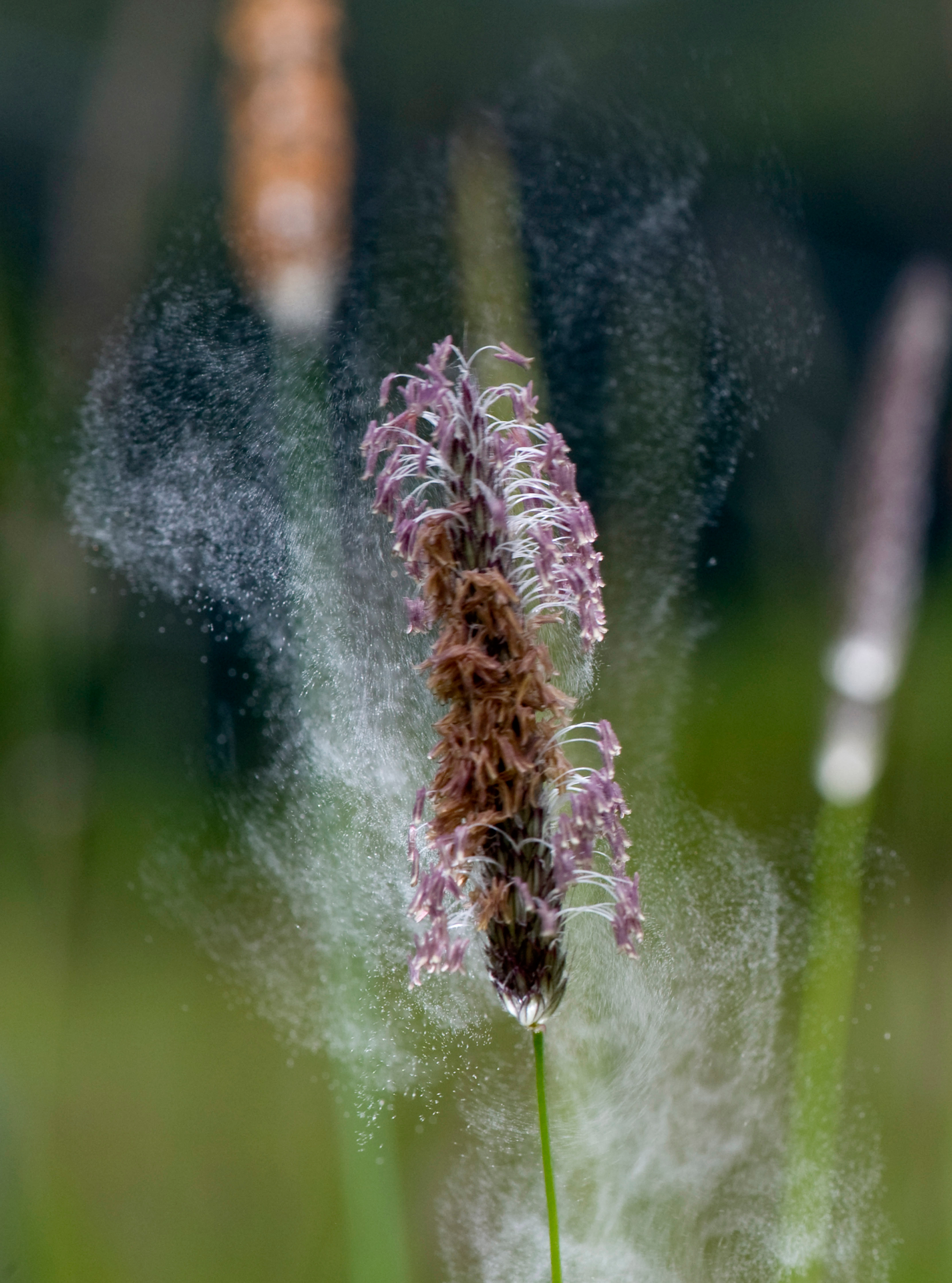how to stop hay fever without antihistamines