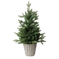 Top 10 Christmas Trees