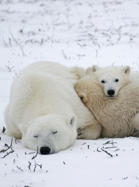 Arctic animal photos