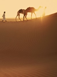 Wild Arabia In Pictures