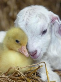 Spring Baby Animals