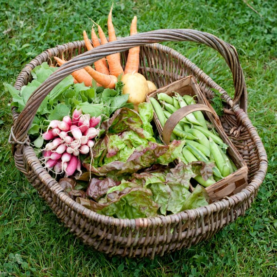 veg basket photo