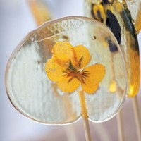 Pansy lollipops
