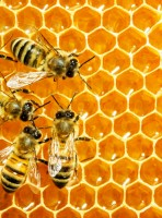 How Bee Venom Can Transform Your Skin