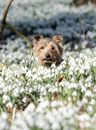 Pictures To Prove Spring Is On Its Way