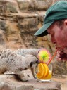 What Heatwave? Cute Animals Cool Off With Ice Lollies