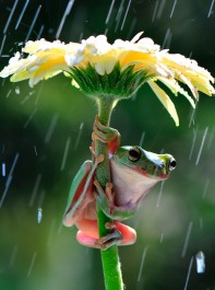 Stuck In A Shower? These Frogs Have The Answer