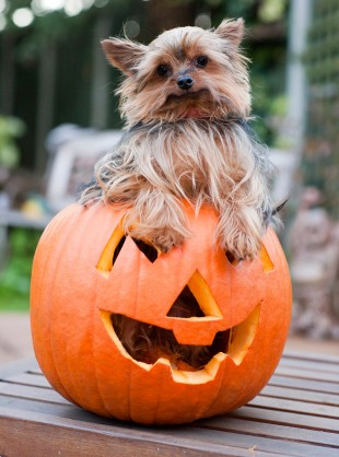 The Cutest Animals Celebrating Halloween