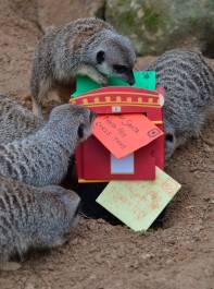 Adorable Pictures Of Zoo Animals Enjoying Christmas