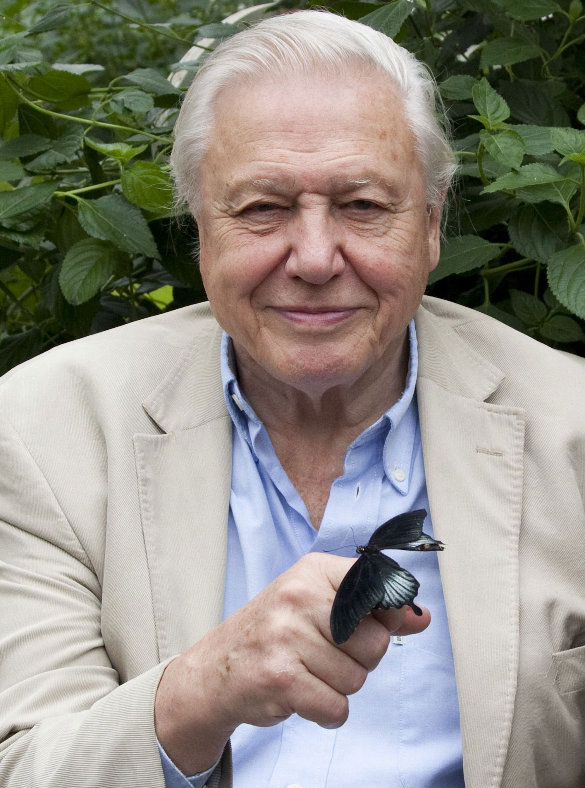 6 Things You Didn 39 T Know About David Attenborough Woman