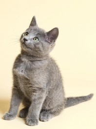 Why Your Cat Is Good For Your Health
