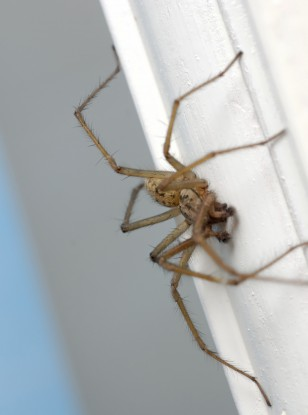 10 Ways To Deter Spiders From Entering Your Home