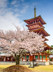 Why 2018 Is The Best (And Cheapest) Year To Visit Japan