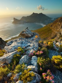 8 Incredible Things To Do In South Africa