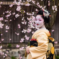 The Ultimate Cherry Blossom Tour of Japan